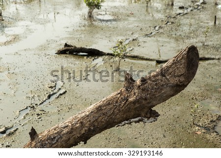dead tree on the mangrove