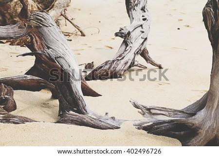 dead tree on tropical beach - stock photo