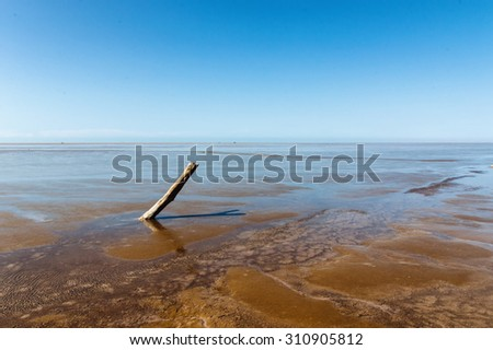 Dead tree part on coast with clear blue sky - stock photo