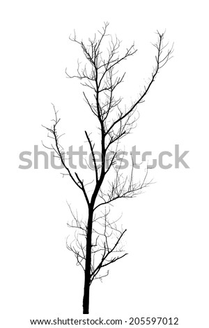 Dead tree silhouette.  old dry oak crown without leafs isolated on white - stock photo