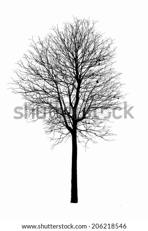 Dead tree silhouette.  old dry oak crown without leafs isolated on white