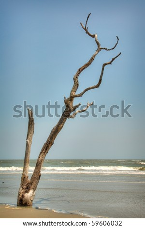 Dead Tree Still Standing on the Beach