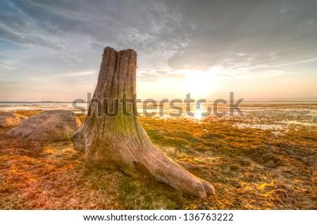 Dead Tree Stump on Sunset Background (High Dynamic Range) - stock photo