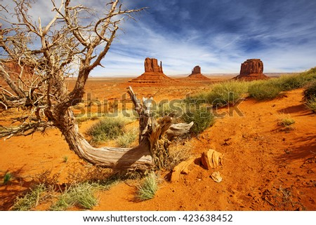 dead tree trunk in the monument valley - stock photo