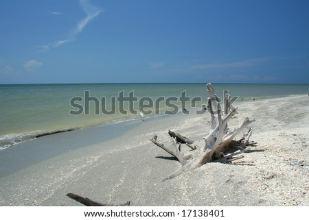 Dead tree trunk washed ashore, Sanibel Island, Florida