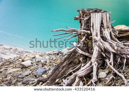 dead tree trunks and roots at a lake - stock photo