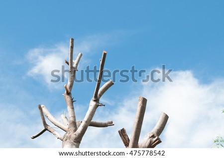 Dead tree with blue sky.