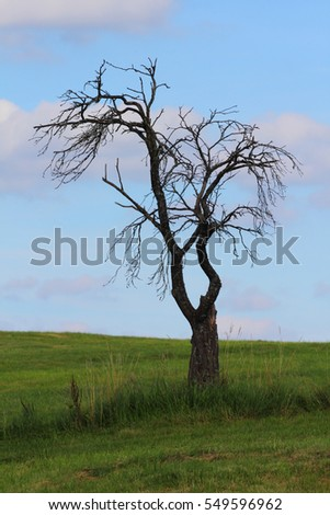 Dead tree with blue sky in the background