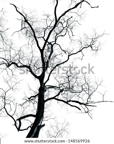 Dead Tree without leaves isolated on white background ,can be used for background - stock photo