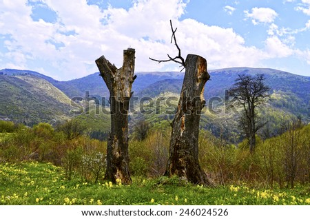 dead trees - stock photo