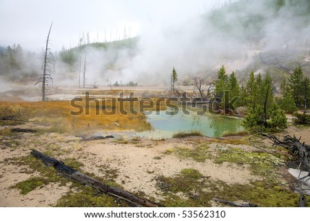 Dead trees and colorful pools caused by sulphuric soil condition in a geothermal area, Yellowstone National Park, Wyoming, United States.
