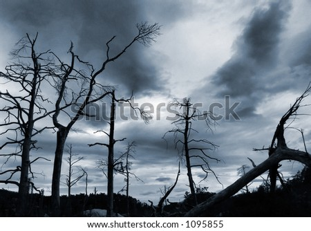 Dead trees and dramatic skies - stock photo