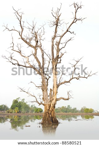 Dead trees and dry. - stock photo