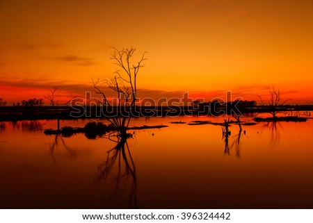 Dead trees and river in beautiful sunset