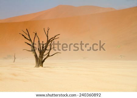 Dead trees between the red dunes of Sossusvlei desert, Namibia - stock photo