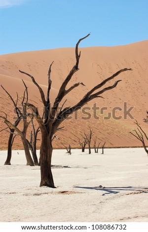 Dead trees, Dead Vlei, Namibia - stock photo