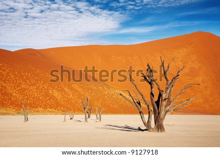 Dead trees in Dead Vlei - Sossusvlei, Namib Desert, Namibia - stock photo