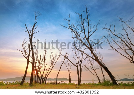 Dead Trees in Lake  - stock photo