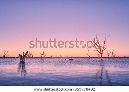 Dead trees in Lake Bonney, SA - stock photo