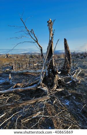 Dead trees in suburb. - stock photo