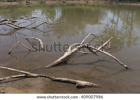 Dead Trees in the forest around a lake with low water levels - stock photo
