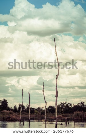 Dead trees lake into the sky as a backdrop. - stock photo
