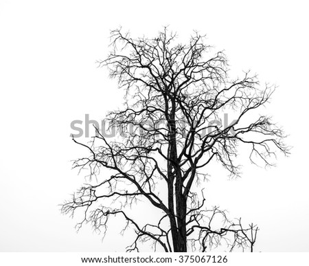 Dead trees on isolated - stock photo