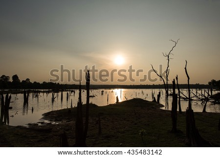 Dead trees on the lake in the sunset. - stock photo
