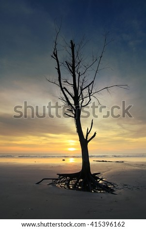 Dead trees on the sand with sunset light . - stock photo