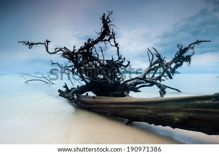 dead trees that died in sea. - stock photo