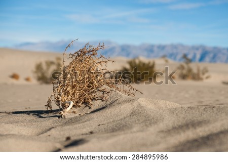 Dead tumbleweed lies on a sea of sand in the Mojave Desert of southern California. - stock photo