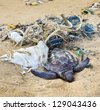 Dead turtle entangled in fishing nets on the ocean - stock photo