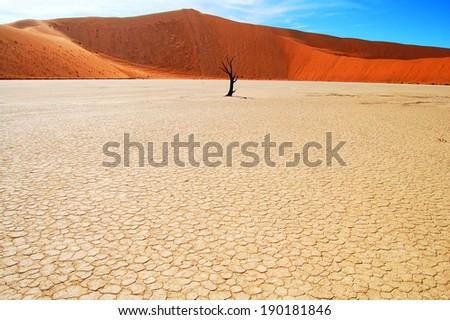 Dead valley tree - Sossusvlei - Namibia - stock photo