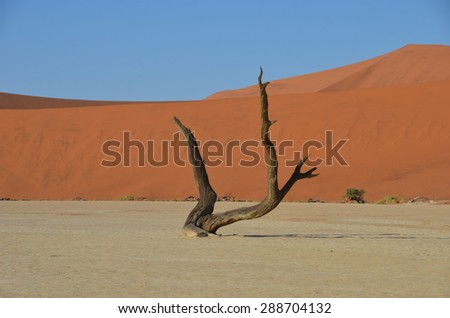 Dead Vlei in Namib desert, Namibia, Africa - stock photo