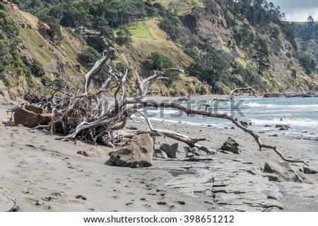 dead wood - stock photo