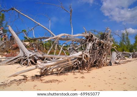 Dead wood at Paradise Beach - stock photo