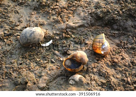 deaded snail with broken shell on background.drought