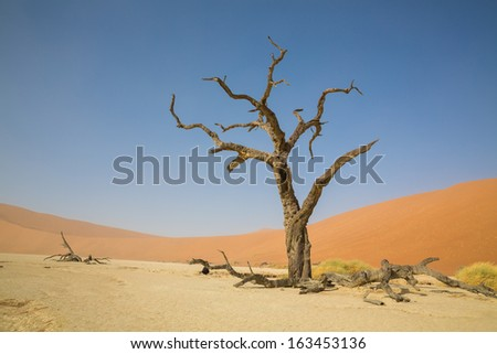 Deadvlei with some of the highest sand dunes in the world and dead acacia trees, Namib-Naukluft Park in Namibia - stock photo