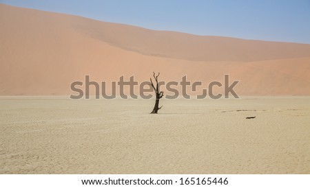 Deadvlei with some of the highest sand dunes in the world and dead acacia trees, Namib-Naukluft Park in Namibia