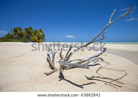 Deadwood on white sand beach front of palm tree of paradise island - stock photo