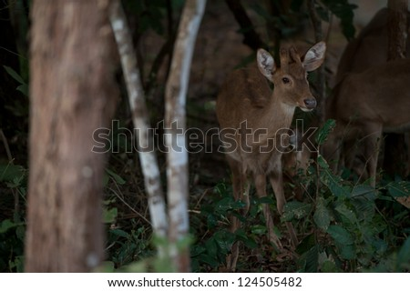 dear in the dark green forest - stock photo