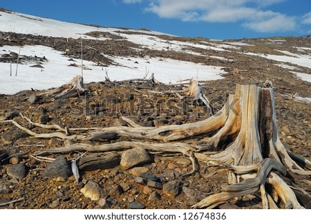 Death grip of died roots - stock photo