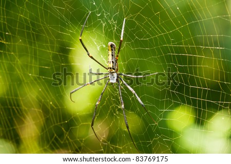 death head spider - stock photo