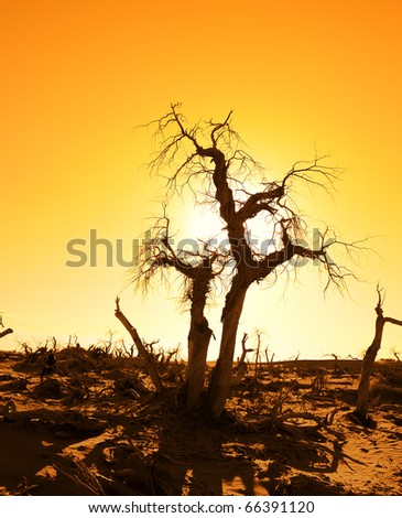 death tree against sunlight over sky background in sunset - stock photo