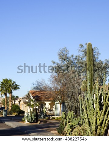 December desert wonderland of green cacti and tropical King palms growing along the residential streets of Arizona major city of Phoenix