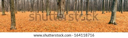 Deciduous forest in autumn (Panorama) - stock photo