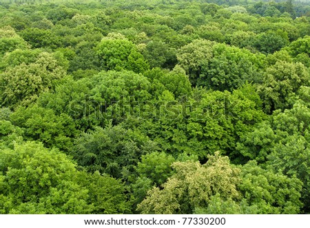 deciduous forest seen from above in summer - stock photo
