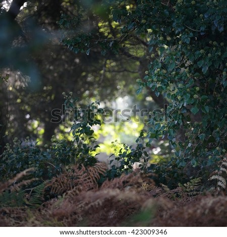 Deciduous forest view with ferns and sun shining through the leaves - stock photo