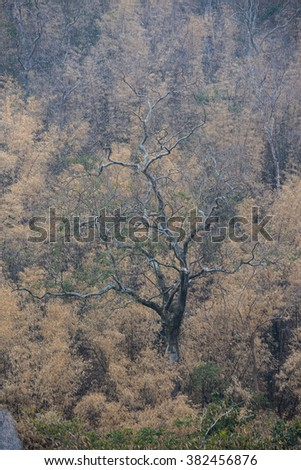 Deciduous trees in the forest make feel strong and hard.