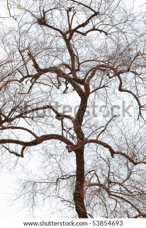 Deciduous trees on the white background. - stock photo